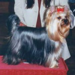 02.-Gipsy-Jubilee-of-Padawis-7-1-1999