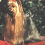 15.-Ch.Agapi-della-Antiche-Mura-4-7-1984.