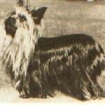 28.-Ch.Doone-of-Wiske-12-3-1959